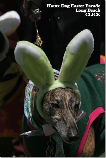 perros pascua (9)