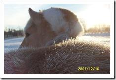 frost_dec16_2001_12