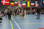 20130511-BMCN-Bullmastiff-Championship-Clubmatch-1754.jpg