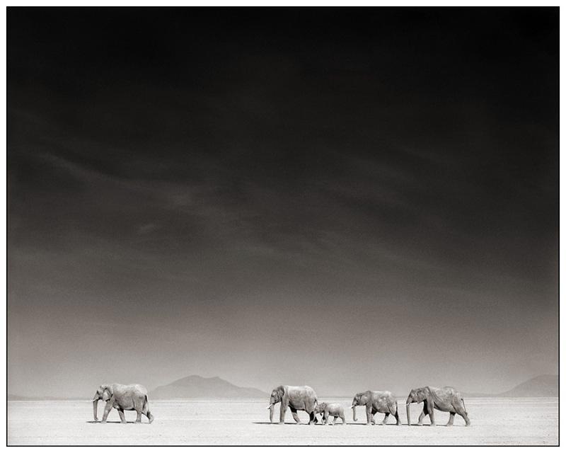 ElephantsBLBD
