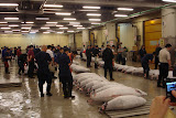 Tuna ready for auction at the Tsukiji fish market