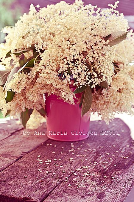 10Sirop din flori de soc