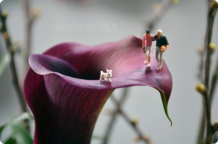 Hunderunde (02) auf der lila Calla am kleinen Dienstag