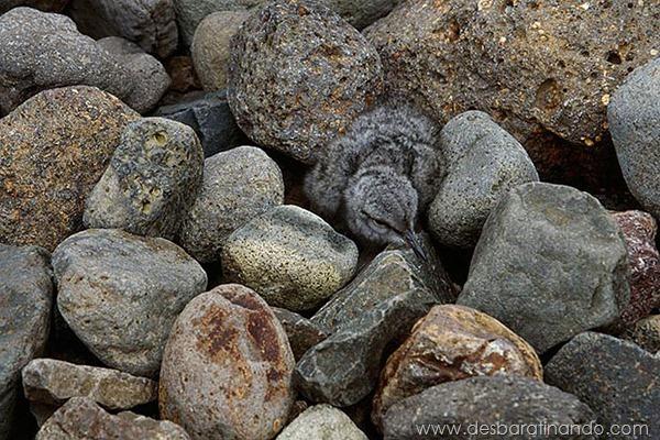 camuflagem-invisivel-animal-camouflage-photography-art-wolfe-desbaratinando (14)