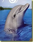 le dauphin FLIPPER