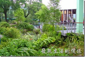 感覺上這座南投紙教堂希望把園區塑造成自然昆蟲的棲息地,讓自然與人文共存。