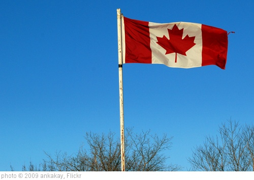 'canadian flag' photo (c) 2009, ankakay - license: http://creativecommons.org/licenses/by/2.0/