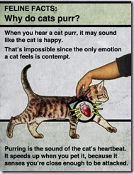 cats purr