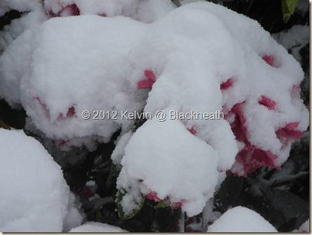 Blackheath snow 12