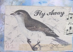 atc bird on blue polished stone background fly away
