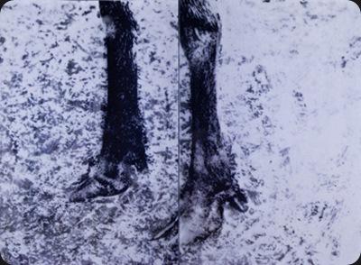 elk_feet
