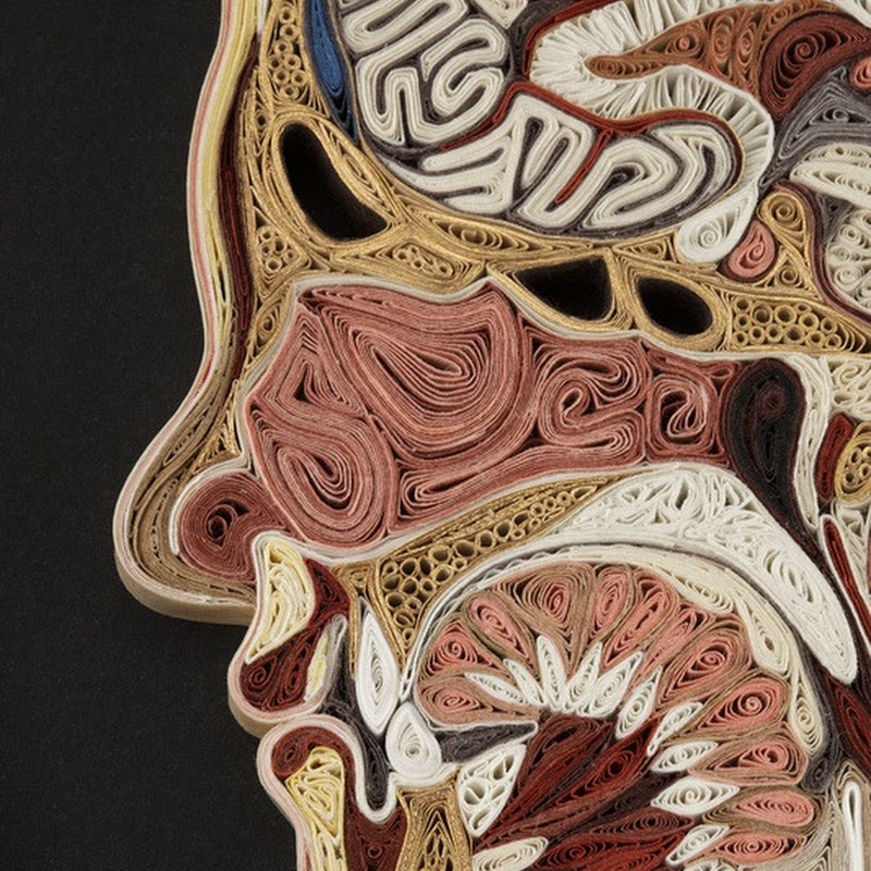 Stunning Anatomical Cross-Sections Made From Paper by Lisa Nilsson