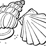 conchas-1.jpg