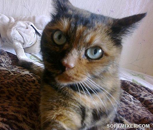 112572712_masya_selfi