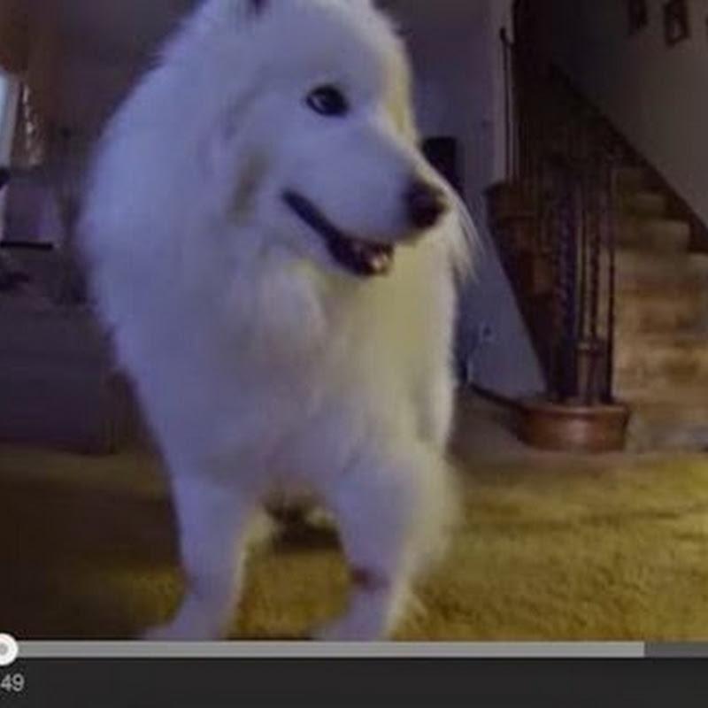 Μια ώρα  βούρτσισμα σε ένα σκυλί