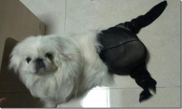 dogs-pantyhose-2