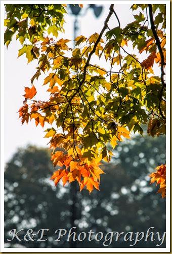 Fall 2013 (18 of 59)