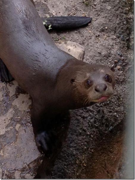 funny-animals-cute-22