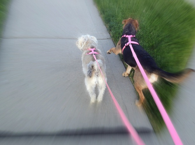 girlsrunning