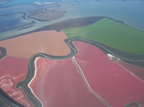 Salt ponds with pink colored Haloarchaea at San Francisco Bay Salt Ponds