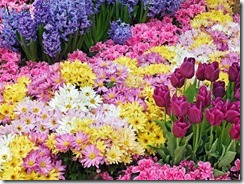 bunga berbiji