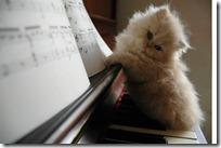 gato pianista blogdeimagenes (28)
