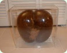 MonaRisk-Coconut