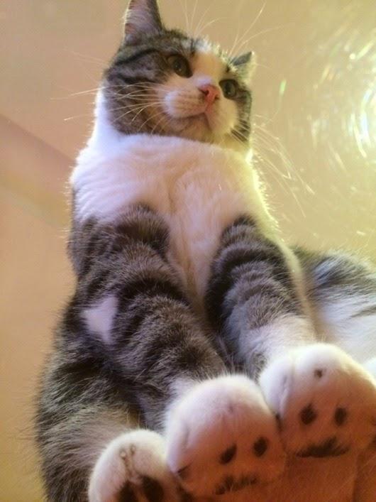 вид-снизу-коты-на-стеклянных-столах-2