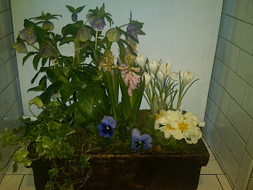 Corinne thought this little window box of flowers was pretty sweet.