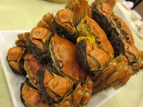 Chinese mitten-handed crab