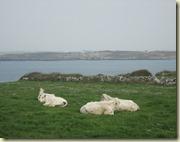 07.Más vacas