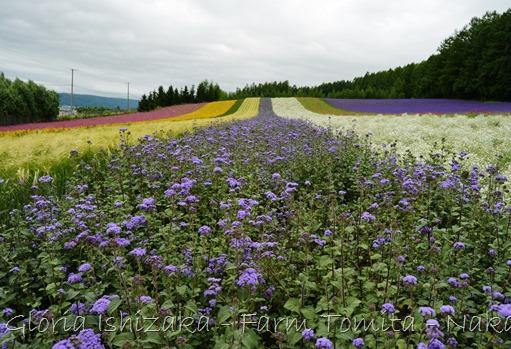 Glória Ishizaka - Farm Tomita 63