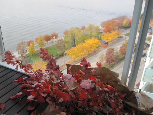 The colors of the leaves will be the perfect touch to my home to create an ambience of the season.