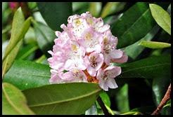 9a - wildflowers