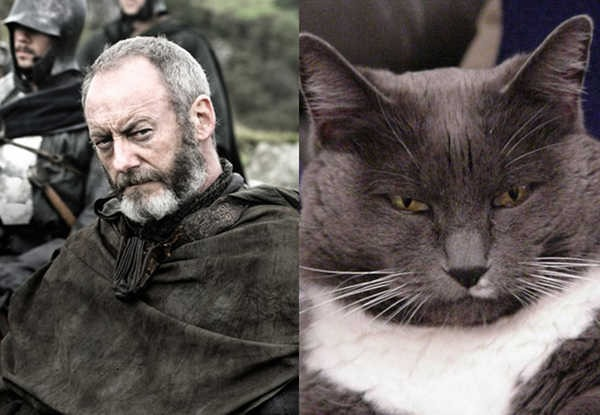 E se os personagens de Game of Thrones fossem gatos 3