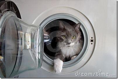 gatos lavadora (4)