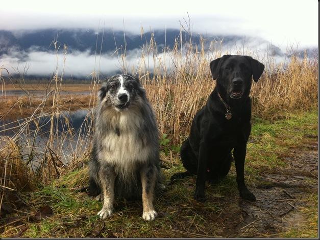 Mojo and Buddy 4