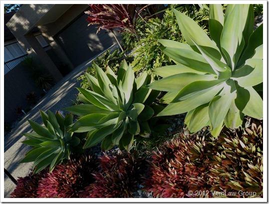SucculentsP1030920
