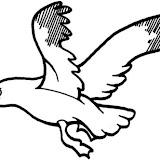 gaviota-volando-dibujos-para-colorear.jpg