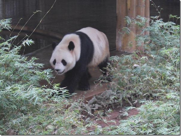 7 panda