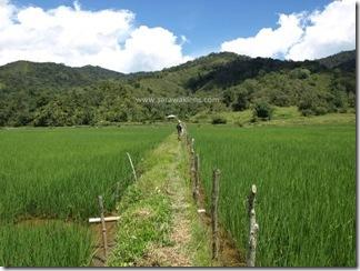 Bakalalan_rice_field_sawah_padi_2