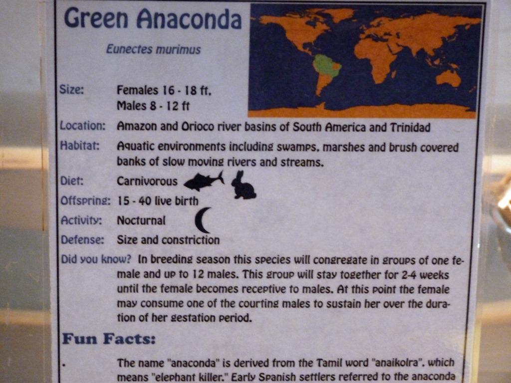 [Reptile-Zoo---Green-Anaconda-25.jpg]