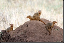 October 19, 2012 mongoose
