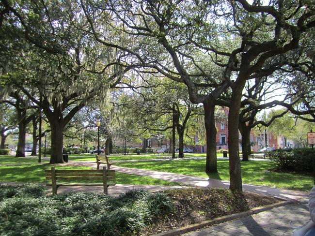 Savannah 010