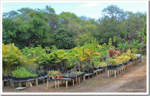 Ordinaire 130718_MauiNuiBotanicalGardens_042. Maui Nui Botanical Gardens Nursery.  130718_MauiNuiBotanicalGardens_045