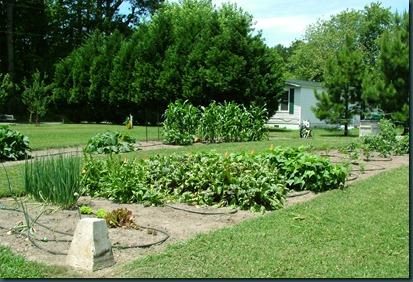 garden overview0623