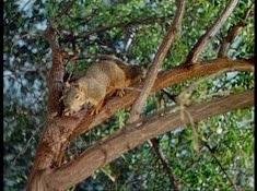 25 l'écureuil