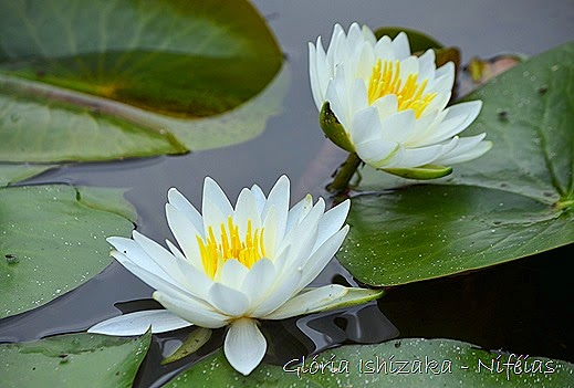 Glória Ishizaka - flores 102
