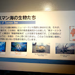living of Tasman Sea includes the Old Wife, watch out Australians in Shinagawa, Tokyo, Japan