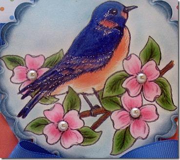 Blue Bird close up